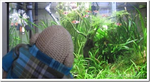 toms fish tank