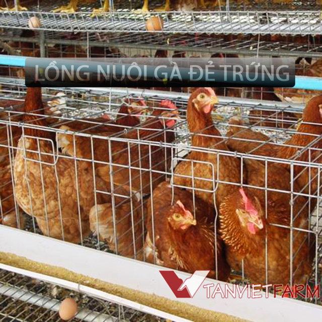 Chuồng nuôi gà đẻ trứng 02