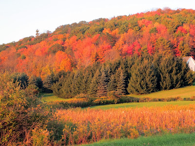 Fall Foliage in upstate New York