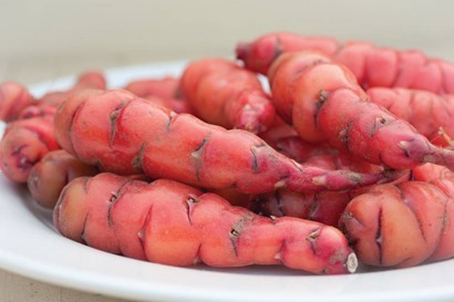 Oca tubers_TM use only copyright Thompson and Morgan_web
