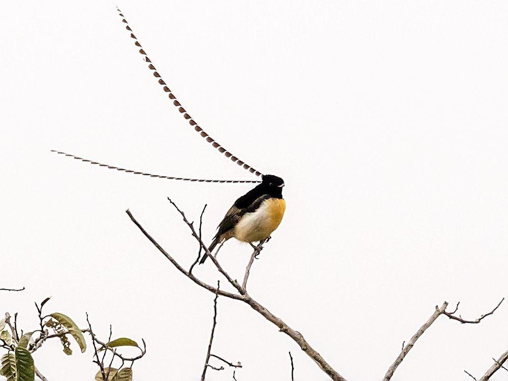 Watch The Superb Bird-...
