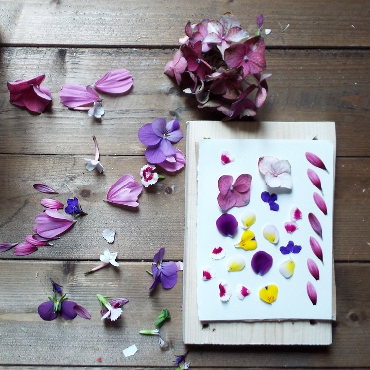 arranging petals for pressing