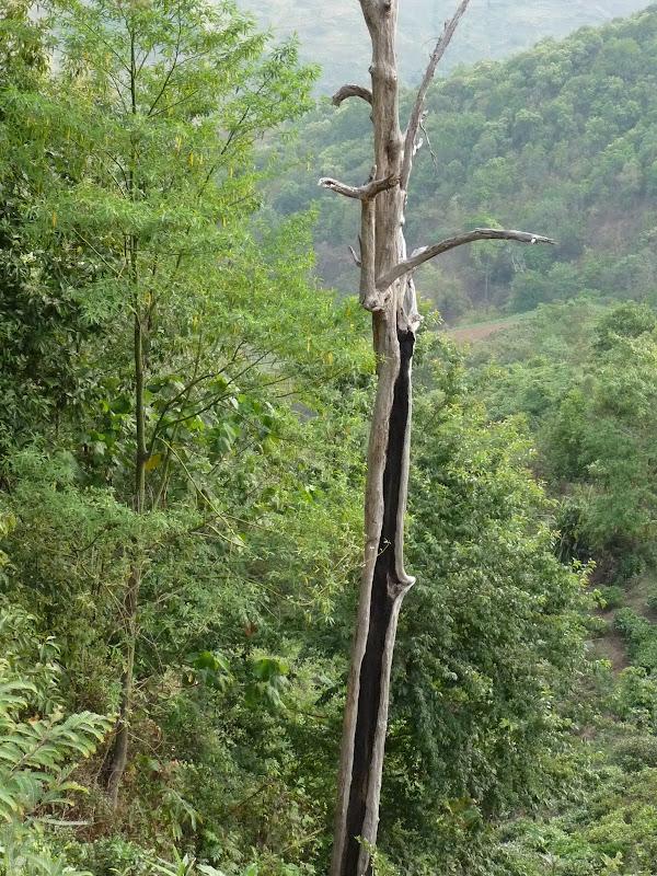 Chine: randonnée xishangbanna, région de Bada - Picture1%2B953.jpg