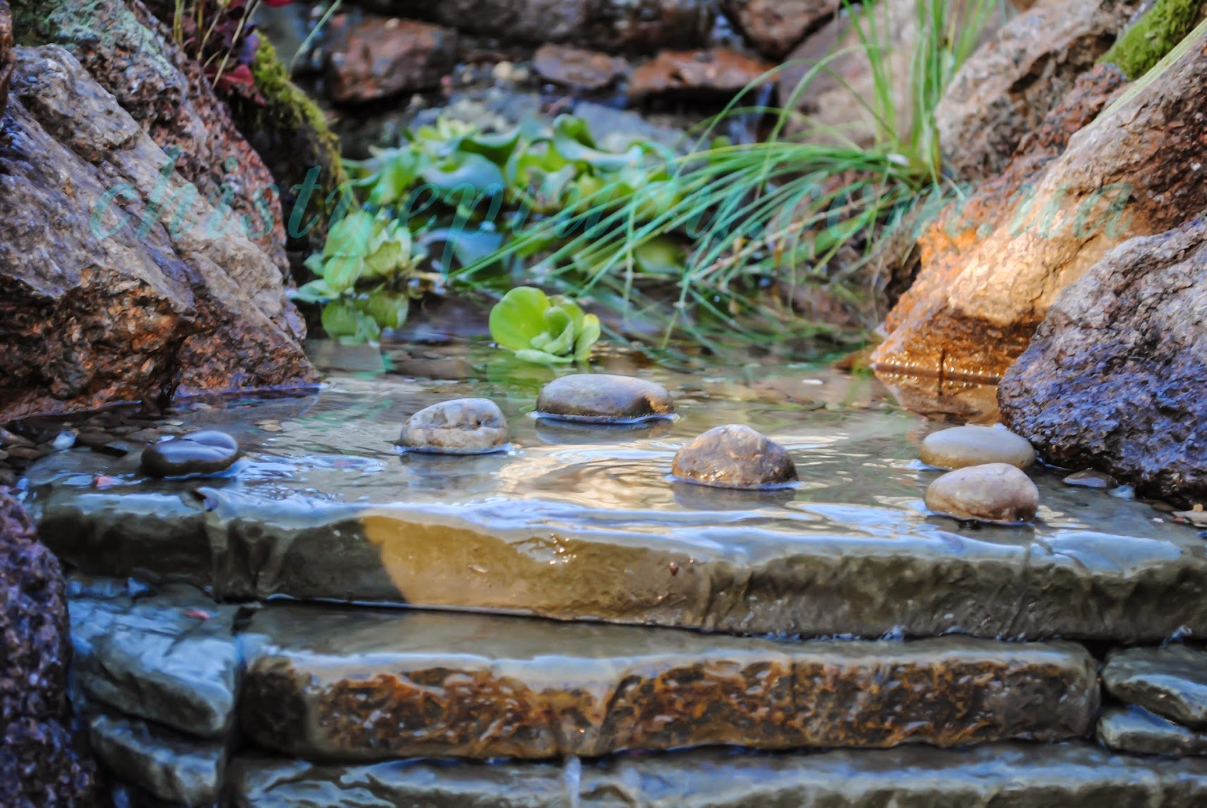 Ручьи. Чистые пруды