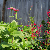 Gardening 2011 - 100_7924.JPG