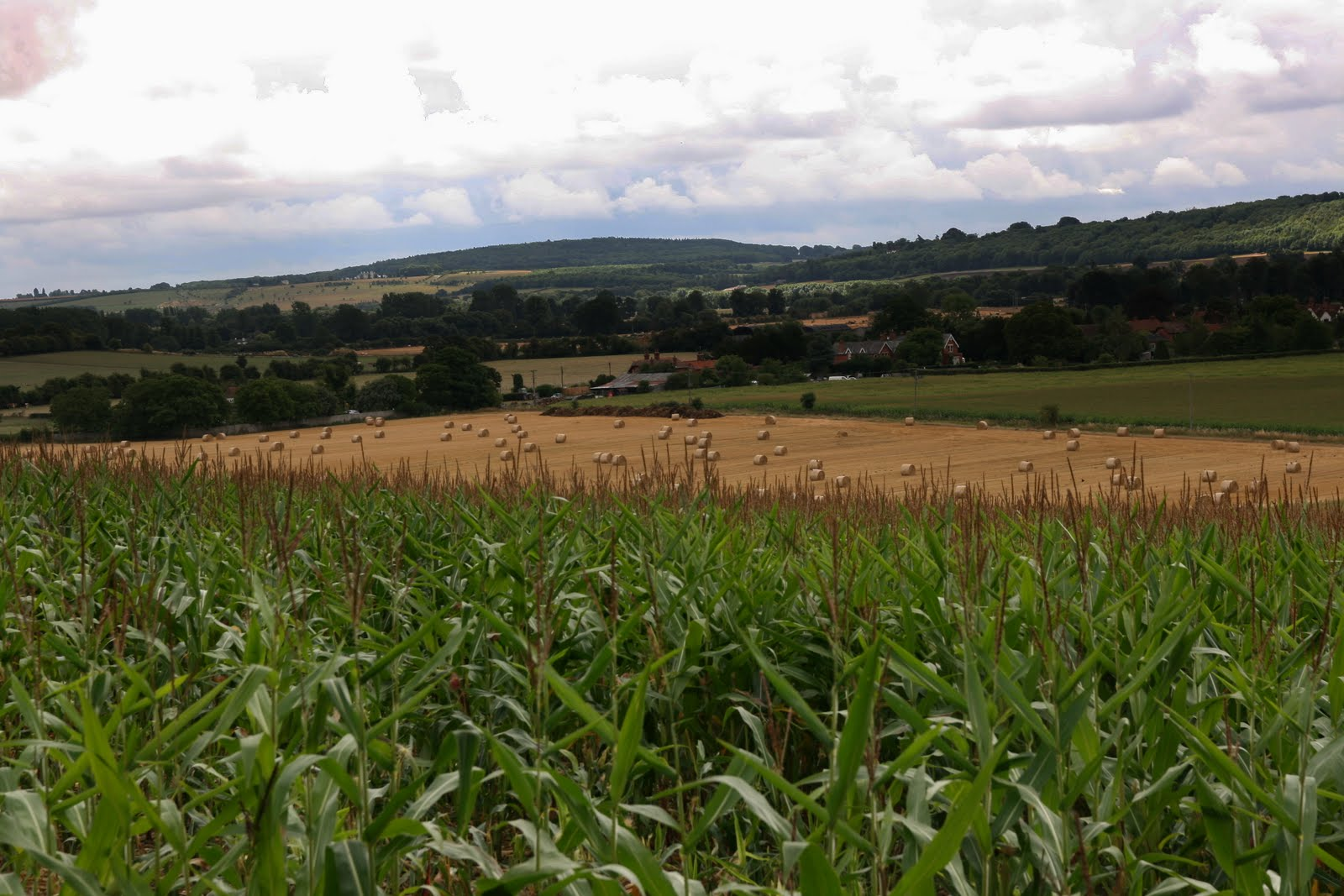 1008 002 Henley via Hambleden Circular, The Thames Valley, England Wheat and straw