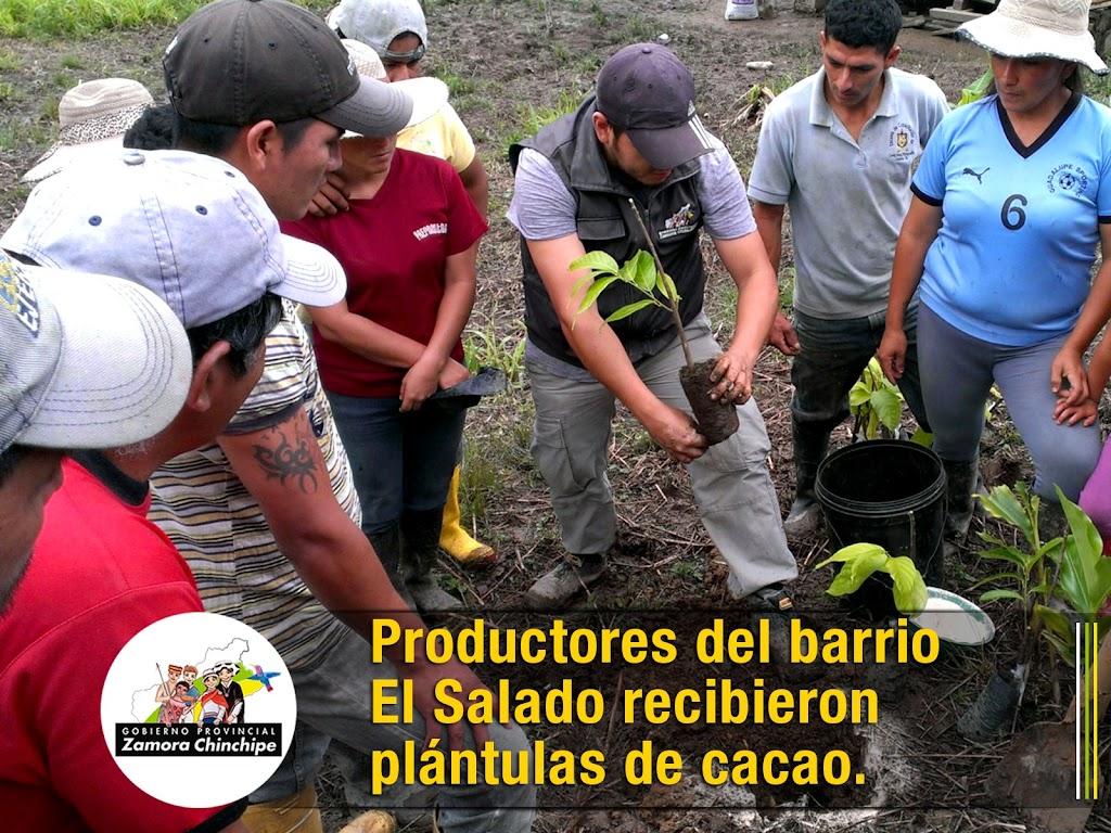 PRODUCTORES DEL BARRIO EL SALADO RECIBIERON PLÁNTULAS DE CACAO.