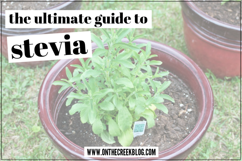 The ultimate guide to stevia plant