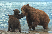 https://lh3.googleusercontent.com/-rFsF2ylSA-k/Vb0-ZYIjZ8I/AAAAAAAAAKo/QatR6c-flGA/s220-Ic42/Bear%252520family.jpg
