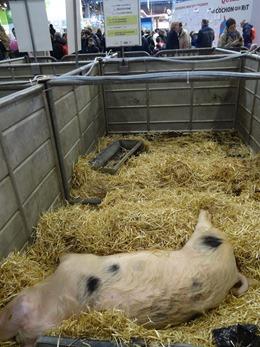 2018.02.25-018 Nougatine porc de Bayeux