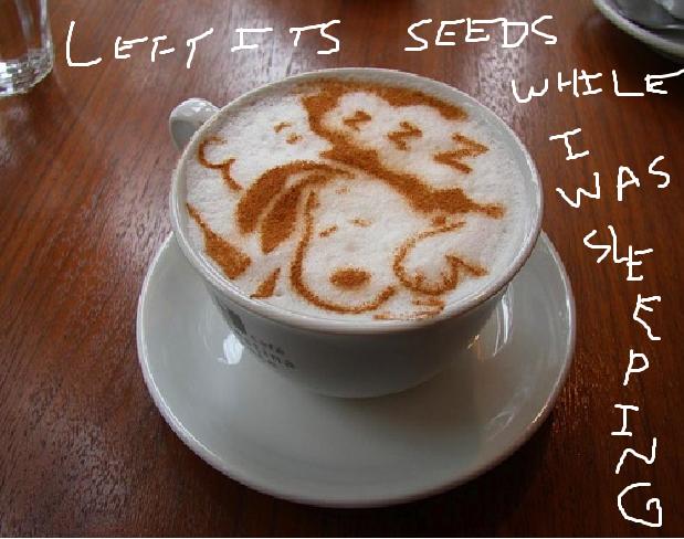 [coffee+seeds+while+sleeping%5B4%5D]