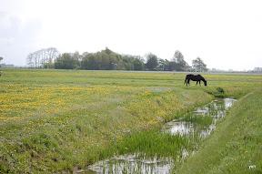 """""""Het kleine Paradijs"""" """"natuur in de omgeving"""" lente"""