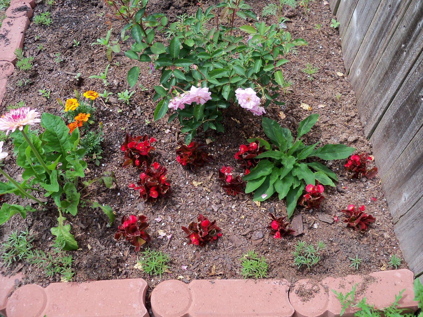 Gardening 2010 - 101_1059.JPG