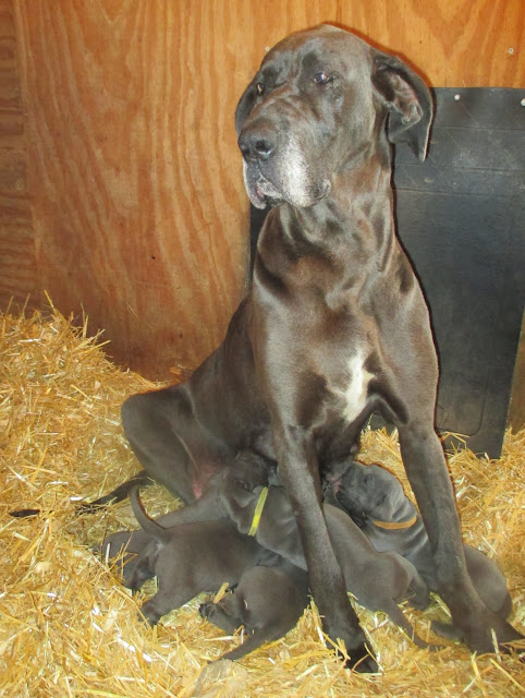 Saffy with her babies @ 3 weeks