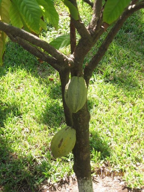 Tree Fruit - IMG_0898.JPG