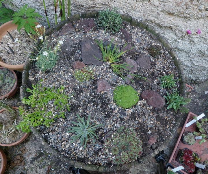 Quelles plantes de rocaille pour un demi tonneau ? P5252389