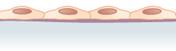 Epitel skuamosa selapis