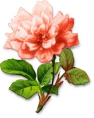 blomster%252520%2525281478%252529.png?gl=DK