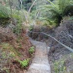 Lyrebird Dell Track (186900)