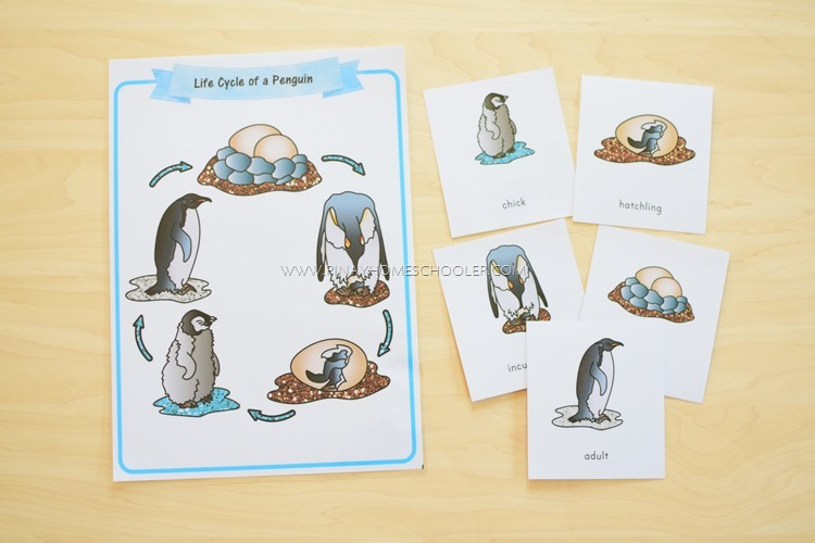 LIFE CYCLE OF A PENGUIN SEQUENCING ACTIVITY