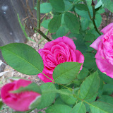 Gardening 2010, Part Three - 101_4878.JPG