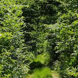 Forêt de Dreux : chemin forestier près des Hautes-Lisières ; biotope de Ladoga camilla, Apatura iris, Aphotanpus hyperantus, etc. Photo : 31 mai 2009, J.-M. Gayman