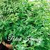 My Herbs Garden