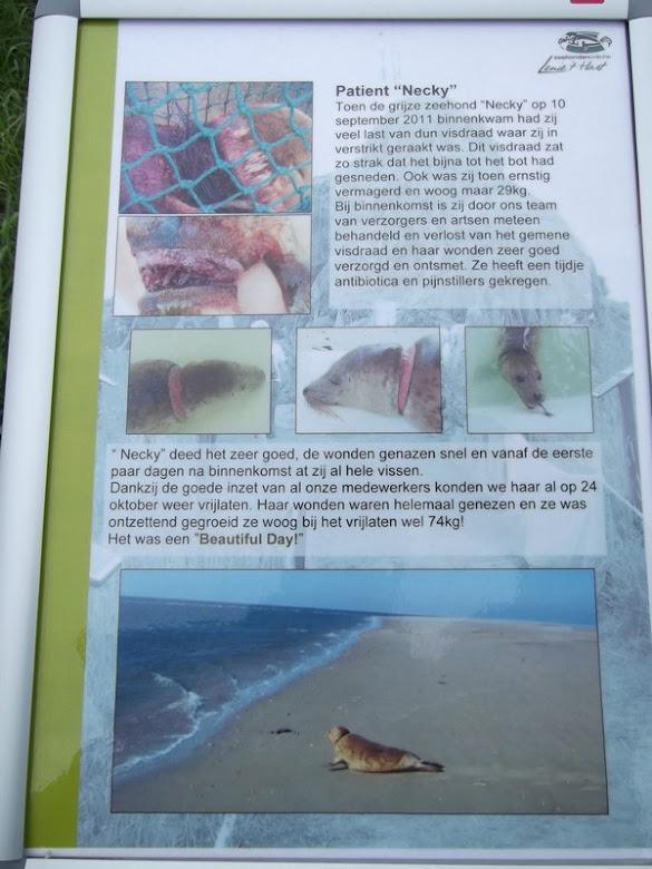 Zeehondencreche