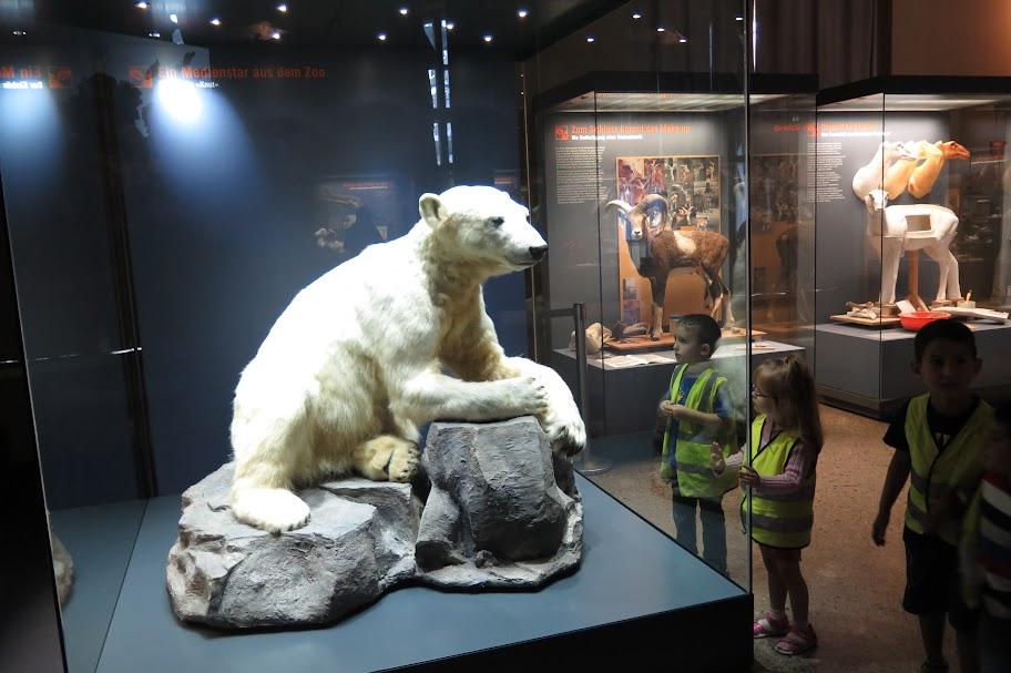 Knut - Der wohl berühmteste Eisbär der Welt