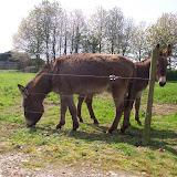 sally chez son éleveur mai 2009
