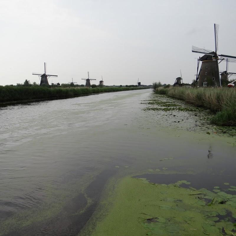 Day_6_Kinderdijk_20.JPG