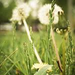 Spring (8 of 25).jpg