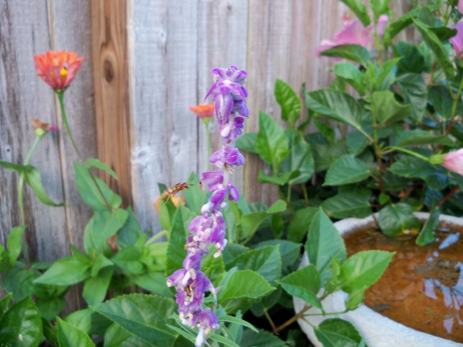 Gardening 2012 - 115_2061.JPG