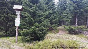 Na zdjęciu rozwidlenie szlaków, nasz prowadzi w gęsty las