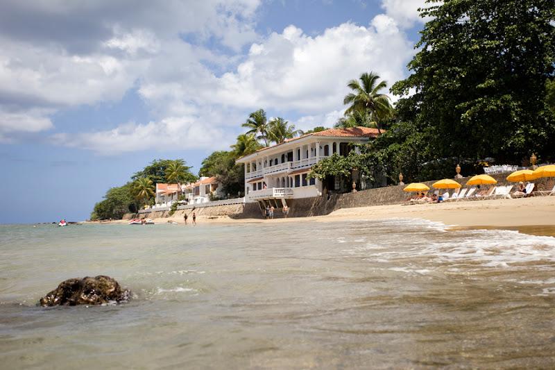 horned dorset primavera puerto rico