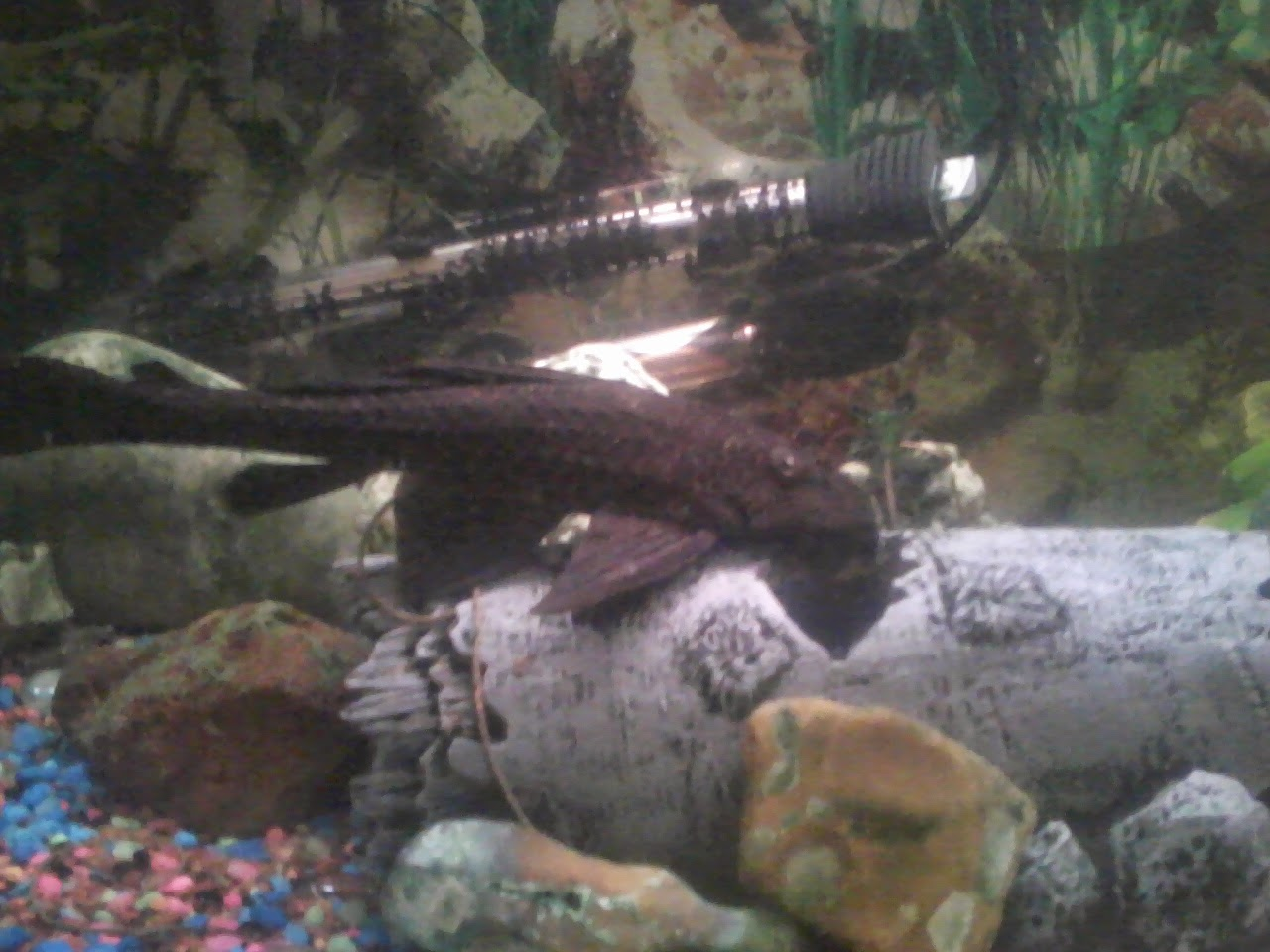 Fish - 1119184129.jpg