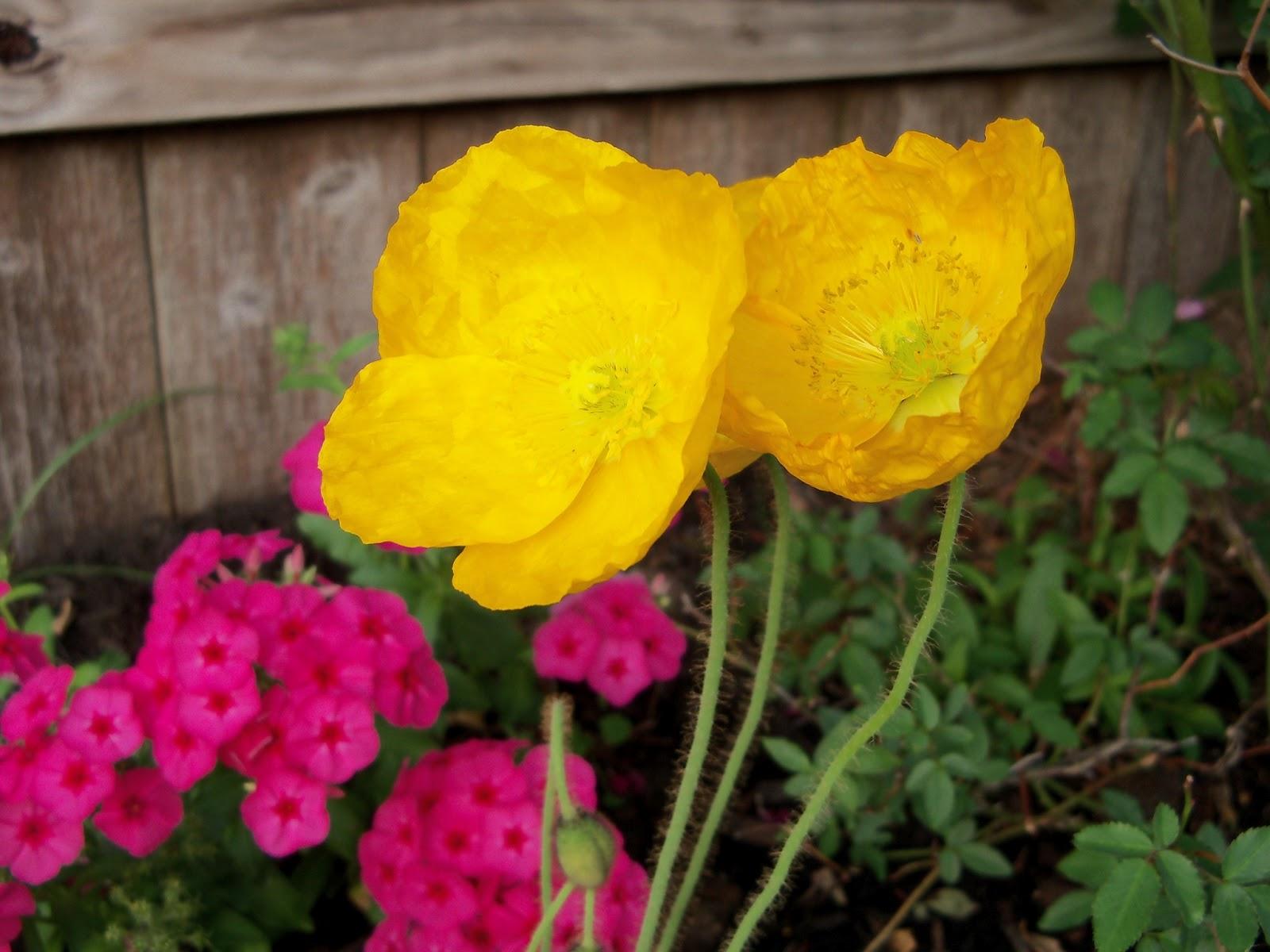 Gardening 2011 - 100_7101.JPG