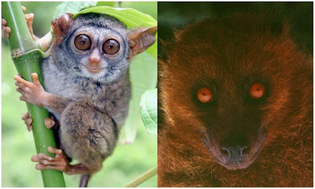Fourteen Rare Animals In Nature.