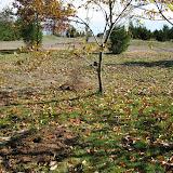 Hammo Planting - Shannon Schiesser - IMG_4970.JPG