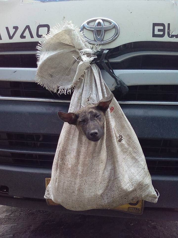 Image of A dog was placed in a sack and tied hanging on the front of a passenger van in Agusan del Sur.