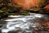 Goldener Herbst in der Kammnitz Klamm (http://www.Naturfoto-Steudner.de)