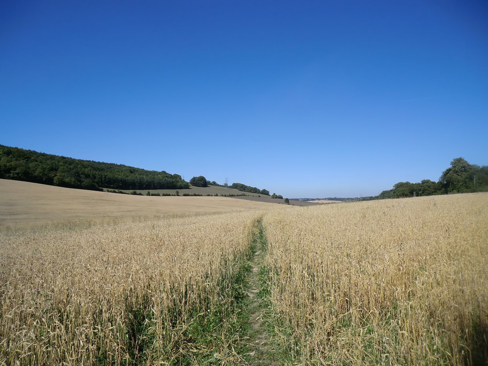 CIMG3913 Through a wheat field near Great Buckland