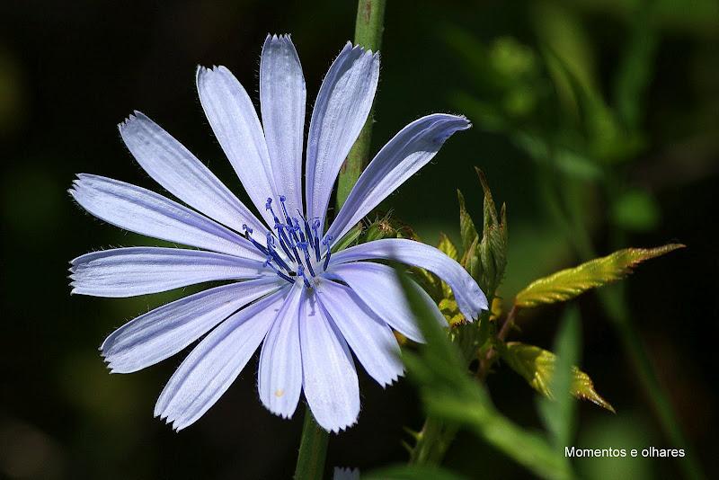 Natureza em Azul Bebé