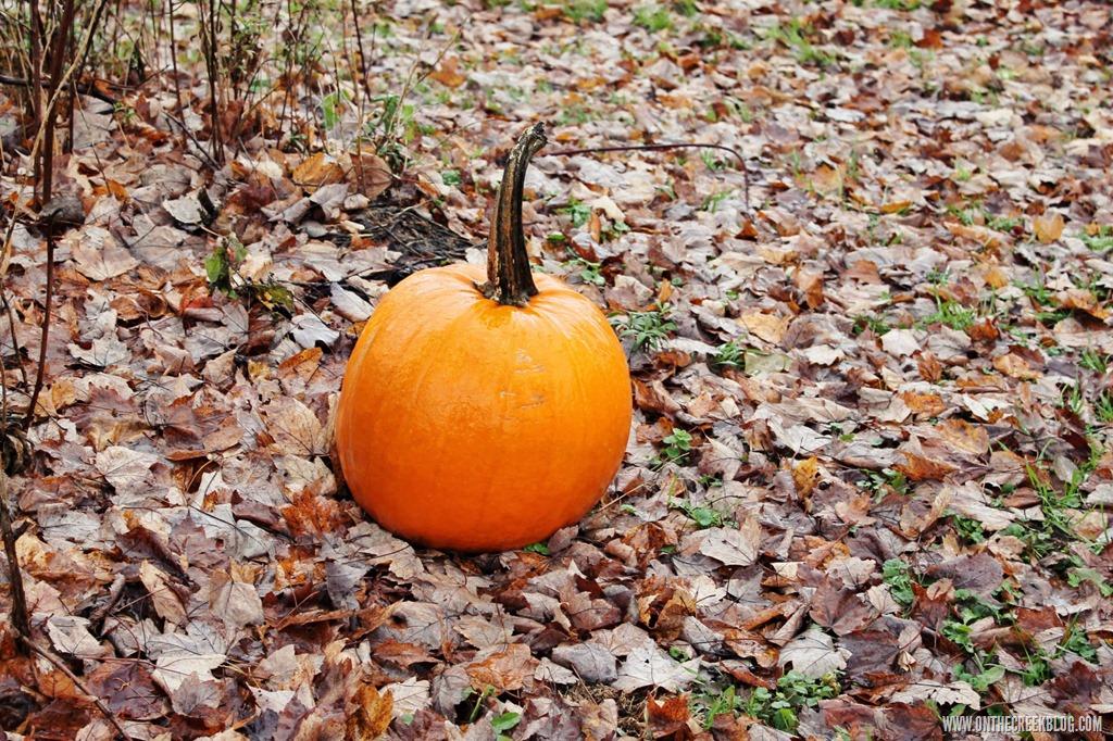[pumpkin12%5B10%5D]