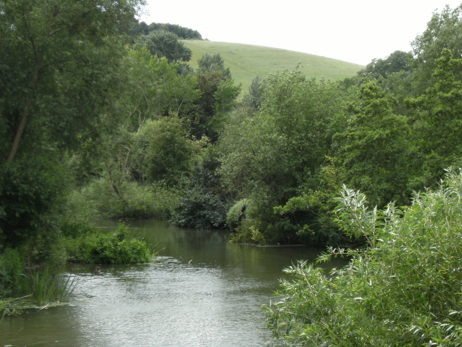 1006190002 The Thames at Little Wittenham