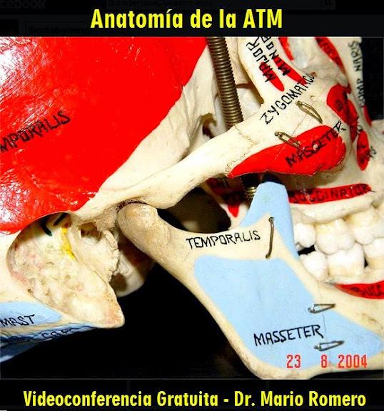 anatomia-atm