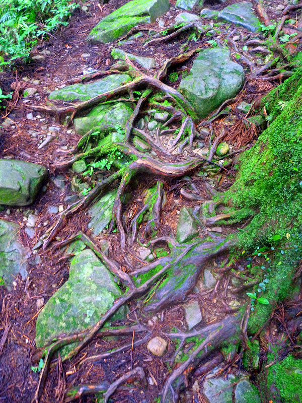 Petite randonnée au sud de Taufen, dans la région de Miaoli - P1330639.JPG