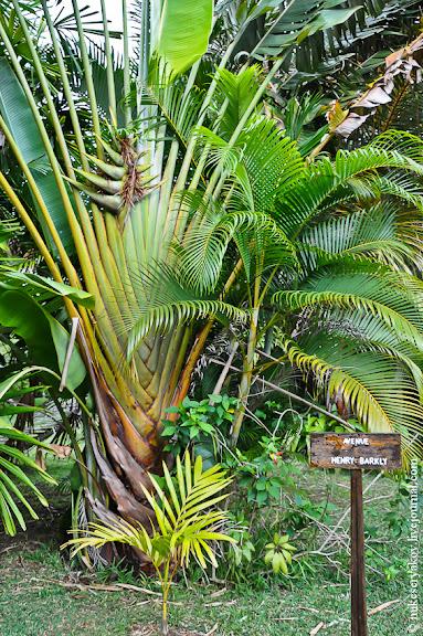 Пальма путешественников