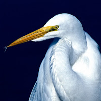 greategret1.jpg