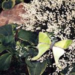 images-Landscape Lighting and Illumination-illum_b4.jpg